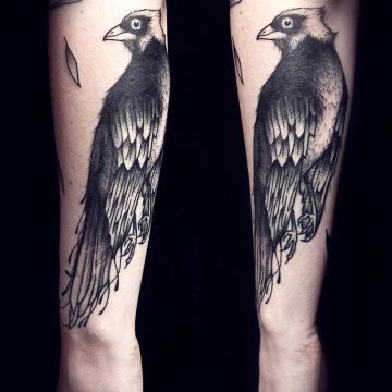 oiseau-clara